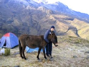 Love story entre Bertrand et la mule