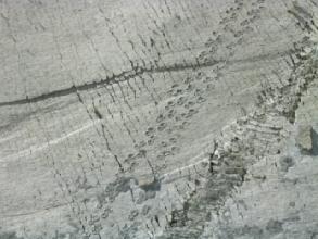 Traces fraiches dans le ciment!