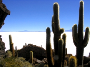 La fameuse isla de los pescadores et ses cactus, en plein milieu du Salar