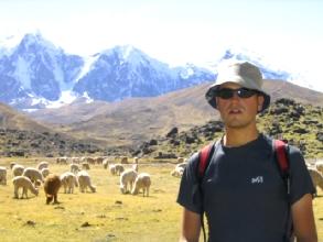 Un Bertrand au milieu des camelides du circuit de l'Ausangate au Pérou