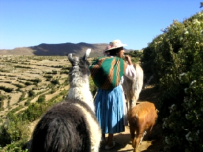 Campesina de l'Isla del sol allant au champs avec ane, lama, cochon, mouton