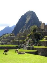 Les tondeuses a gazon du Machu Picchu