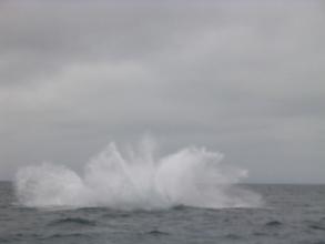 Fin du saut d'une baleine a bosse