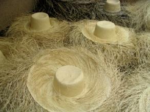 Chapeaux Panama avant leur mise en forme finale