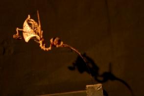 Squelette de colibri du musee des squelettes de Cuenca