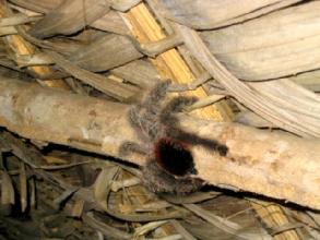 Petite araignee a Misahualli