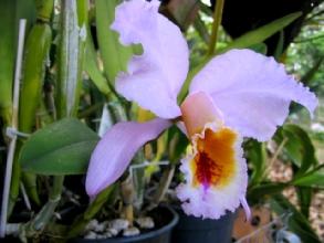 Orchidee de la Finca Galves