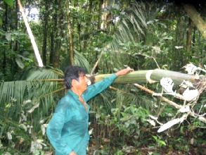 Le guide se charge d'achever le palmier..