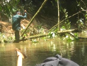 Le guide Augusto en equilibre en train de couper un arbre a la machette