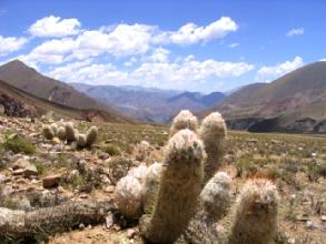Cactus dans la vallee d'Iruja a proximite de Jujuy, Argentine