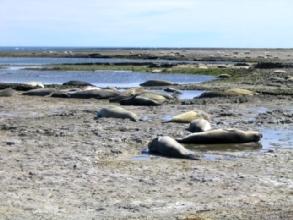 Photo de phoques sur la plage a Peninsule Valdes, Argentine