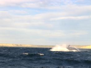 Le show des baleines a Peninsule Valdes, Argentine