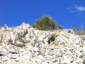 Photo d'une montagne d'huitres fossilisees au parc Bryn Gwyn a cote de Trelew, Argentine
